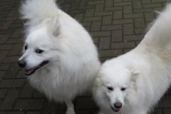Ayla und Katchoen 1